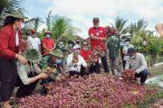 Ketua DPRD imade Dirga S.sos bersama Ibu Bupati Tabanan Menanam Sayur dalam Rangka Optimalisasi Lahan Tidur Untuk Usaha Pertanian